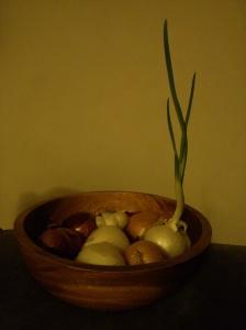 My random onion
